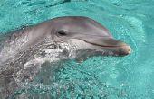 Hoe om te zwemmen met dolfijnen in South Padre