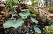 Hoe om te houden van een vijver achtertuin van bevriezing