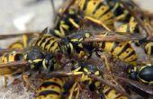 Vliegende insecten die lijken op wespen