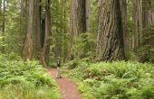 How to Grow een levende Redwood Burl