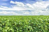 Soja-eiwit isoleren gevaren