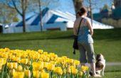 Zijn tulpen giftig voor honden?