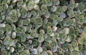 Volle zon & bodembedekker planten