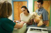Welke oorzaken honden hebben kasten?