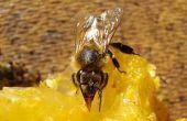 Hoe draai haar met bijenwas