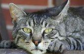 Zijn jeneverbessen giftig voor katten?