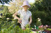 Planten voor POTS-doeleinden: Container tuinieren gids