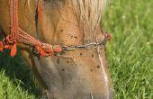 Hoe maak je je eigen paard insecten Spray met essentiële oliën