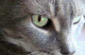 Symptomen van de hersenschudding van een kat