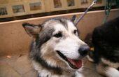 Hoe de behandeling van een hond met prikkeldraad bezuinigingen