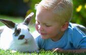 Wat moet ik doen als mijn Bunny een nagel tranen?
