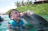 Hoe om te zwemmen met dolfijnen excursies in Nassau Bahama's vergelijken
