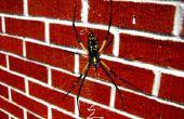 Hoe maak je leuke zelfgemaakte spin Traps