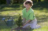 De toelagen van de overheid voor het planten van bomen