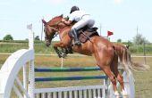Symptomen van Kissing Spines syndroom bij paarden