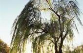 Wat bomen te planten in de buurt van een meer