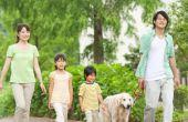 Adequan gebruik bij honden