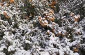 How to Care for BES planten bij koud weer in Georgië