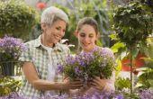 Hoe kunnen worden bevorderd van tieners om tijd doorbrengen met grootouders