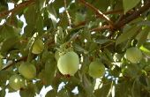 Fruit boom aanplant gids