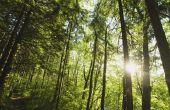 Wat producten zijn gemaakt van bomen?