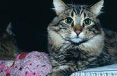 Hoe krijg ik een kat om te stoppen met Me wakker 's nachts