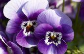 Soorten violette bloemen