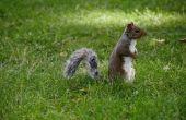 Hoe te houden van eekhoorns uit een loods