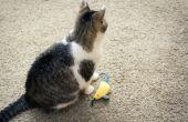Hoe om te leren een kat Fetch