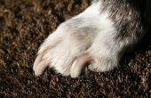 Hond Nail chirurgie