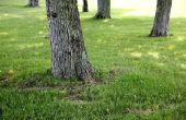 Hoe te verwijderen van de wortel van een boom met een Tool komen-langs