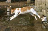 Natuurlijke Pijn Relievers voor katten