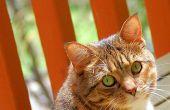 Is Citronella kaarsen branden schadelijk voor katten?