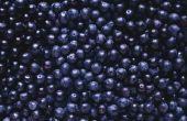 Blueberry Supplement bijwerkingen