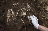 Archeologie partij ideeën en ambachten