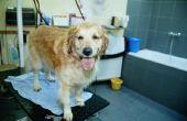 Wat zijn de oorzaken van verlies van het haar van de hond, krassen en vette vacht?