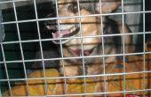 Hoe lang moet een Puppy zijn in een kist?