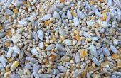 De effecten van formaat van de zaad op plantengroei