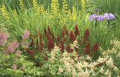 Wat Is een kruidachtige vaste plant?