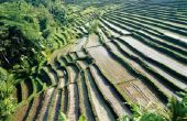 Verschillende soorten bodem & hun oevervegetatie in India