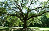 Wat Is een redelijke prijs voor het bijsnijden van de bomen?