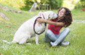 Hoe kan ik stoppen met mijn hond uit het likken van mijn vloer?