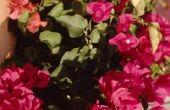 Volle zon planten voor buiten potten in Centraal Florida