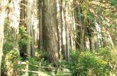 Hoe te bezoeken van de Sequoia Redwoods in Californië