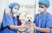 Ideeën ter bevordering van de veterinaire dienst