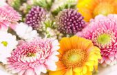 De fasen van een bloem uit zaad tot bloei