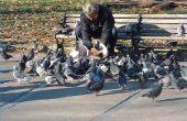 Wat niet te voeden van de duiven