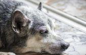 Tekenen van tumoren bij honden