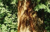 Hoe droog Cedar voor een Smudge stokje