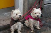 Ziekten die het zenuwstelsel bij honden vallen